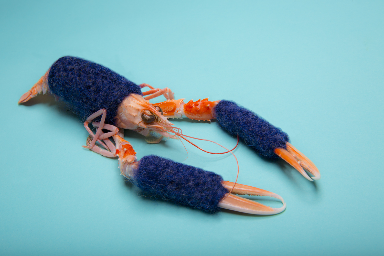 crustace-langoustine